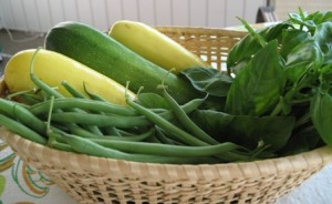 first-pick-of-green-beans-summer-yellow-squash-and-zucchini-and-basil