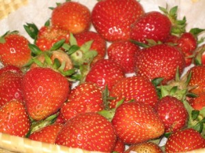 my-first-harvest-of-organic-strawberries2