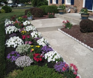 West side flower patch 2