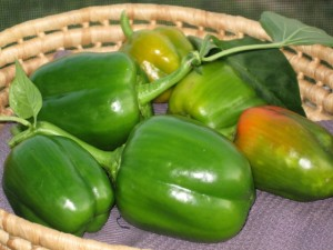 Free Green Peppers crop