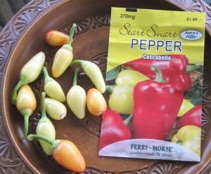 Small but pungent peppers
