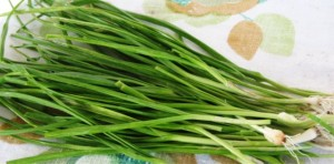 Garlic chives