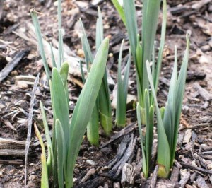 February 2012 signs of spring 4