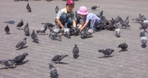 commemorative tribute - pigeons