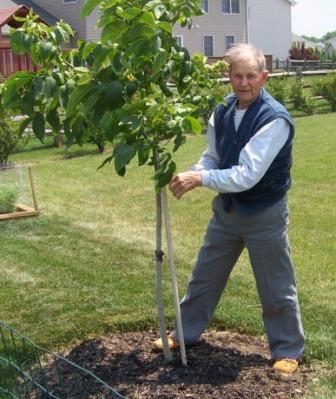 commemorative tribute - walnut tree
