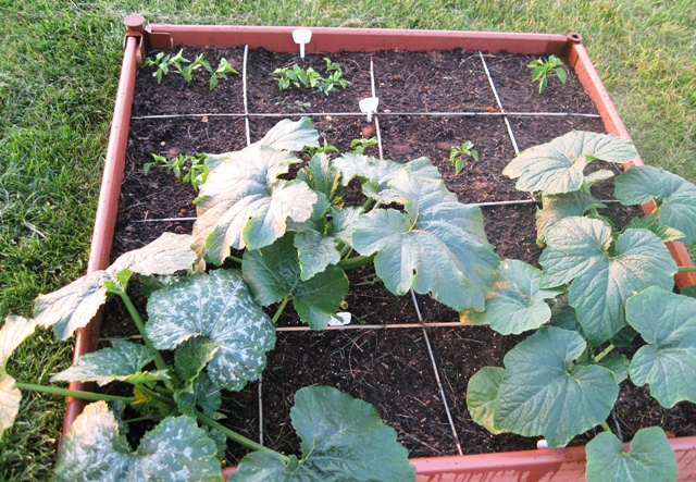 Square Foot Gardening Space Saver And Convenience