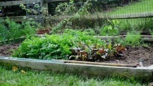 Autumn season vegetable garden