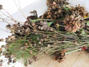 collecting dried up flowers for next year's seeds