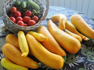July Crop - tomatoes, green beans, cucumbers, huge squash