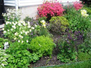 Columbine, Hosta, Azelia, Peony, Coriopsis, Iris