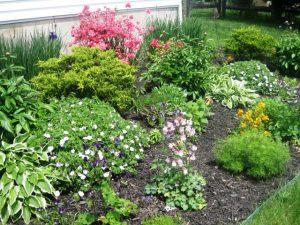 Hosta, Siberian Iris, Azelia, Columbine, Citrona (Wallflower),