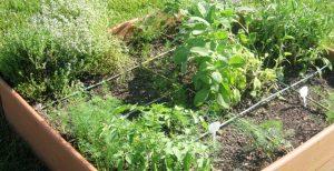 Yarrow, Dahlia, Lilies (3)