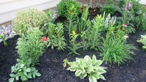 Yarrow, Dahlia, Lilies
