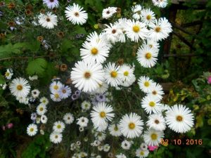 autumn-flowers-16