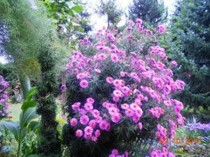 autumn-flowers-6