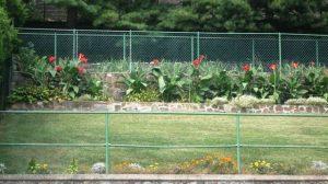 back-yard-canna-lilies-step-1