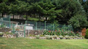 back-yard-canna-lilies-step-2