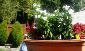 another-potted-plant-arrangement