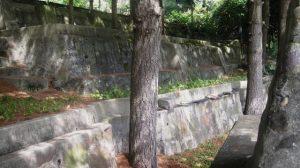 cement-retaining-walls-around-trees