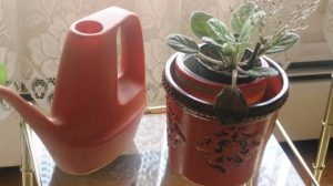 indoor-watering-can-and-african-violet